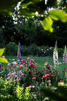 An English-style cottage garden filled with roses and perennials, along with ornamental trees and formal garden beds.