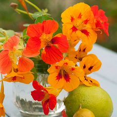 A clear jam jar is the perfect container for a colorful flower arrangement: http://www.bhg.com/holidays/mothers-day/gifts/mothers-day-flowers-ideas/?socsrc=bhgpin051014vibrantblooms&page=28