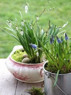 The snowdrops are pretty, but their presentation is enhanced by the china bowl, moss and stones.