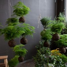Kokedama string garden or Japanese moss ball garden Air Plants, Garden Plants, Indoor Plants, House Plants, Indoor Gardening, Organic Gardening, Hydroponic Gardening, Potted Plants, String Garden