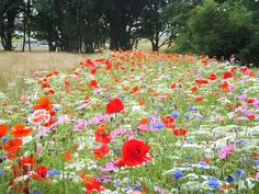 Wildflower meadow goals