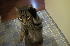 High paw!!