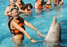 Sea Life Park Hawaii - Swim with Dolphin & All Day Fun Combo Packages