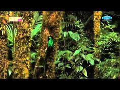 Bosques - Áreas Protegidas de México  Extraordinarios ecosistemas que concentran una gran variedad de especies y brindan servicios ambientales gracias a la cantidad de agua de lluvia que reciben.