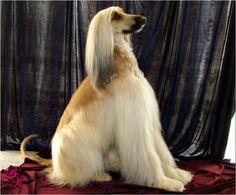 Lovely doggy!