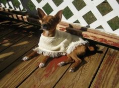 A shawl for my chihuahua