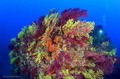 I colori del mare di Scilla. B&B Chianalea 54 http://www.bebchianalea.it