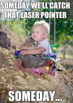 Check it out - Funny Cat Pictures Birthday!!