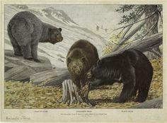 Bear party.
