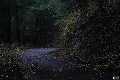 Poezia un hobby: Noaptea in padure