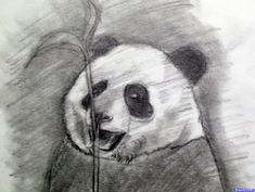 Drawing Step By Step How to Draw a Realistic Panda, Draw Real Panda, Step by Step . Cartoon Panda, Cute Cartoon, 3d Drawing Techniques, Panda Drawing, Easy Drawings Sketches, Loch Ness Monster, Step By Step Drawing, Animal Drawings, Artwork