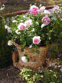 Romantic Roses in a rusty Urn.
