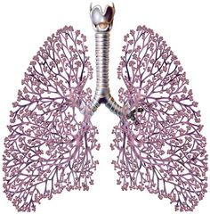 101 Best Heart and Lungs images in 2019 | Heart, lungs