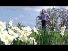 All About Daffodils | At Home With P. Allen Smith