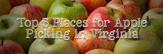 Top 5 Places to Go Apple Picking in Virginia   Recommended by the Team at Paul Davis Restoration & Remodeling of Suburban Virginia