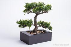 Bonsai Brasilia mittel im schwarzen rechteckigen Kunststofftopf - Online - Shop für Kunstpflanzen, Kunstblumen, Deko-Obst & Gemüse