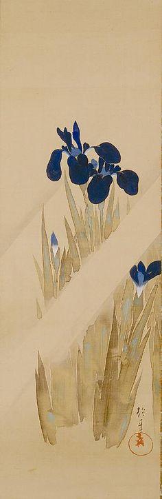 Iris. Sakai Hoitsu. Japan. Early 19th century.                                                                                                                                                                                 Mais