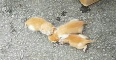 Click to see how a passing stranger saved the lives of three ginger kittens