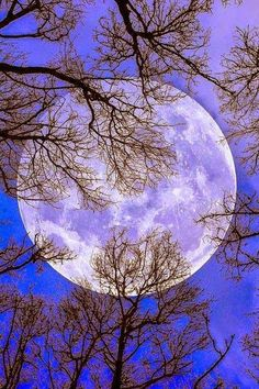 photography Black and White beautiful MY EDIT landscape trees Full Moon b&w moon. - photography Black and White beautiful MY EDIT landscape trees Full Moon b&w moon perspective view n - Moon Moon, Blue Moon, Dark Moon, Moon Rise, White Photography, Nature Photography, Ciel Nocturne, Shoot The Moon, Moon Photos