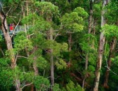 The Tree Top Walk an ideal place to start your Wilderness venture