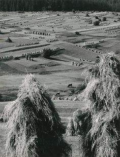 Web umenia | Martin Martinček - Liptov cyklus čiernobielych fotografií 15ks