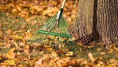 Prepare your lawn and garden for winter using these tips on fall lawn maintenance, winterizing plants, and planting garden bulbs.