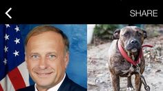 US Congressman Steve King believes dog fighting should be LEGAL! Voice Your Outrage!