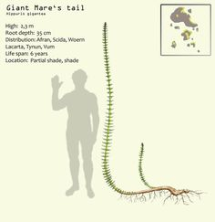 Giant Mare's tail by Hyrotrioskjan
