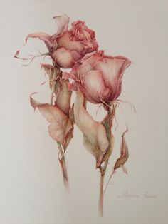 Wilted roses... 50 x 60 cm. Watercolor. Botanicalart. on Behance