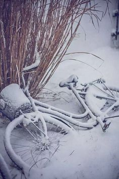 blanc | white | bianco | 白 | belyj | gwyn | color | texture | form | weiss | winter | snow | bike