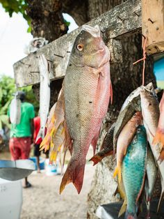 Fresh-caught fish in Montego Bay, Jamaica. Photo by David Lauridson.