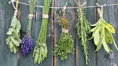 Grow herbs in the kitchen with health benefits, all info included in this post