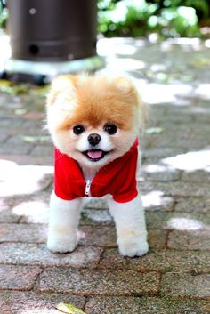 This will be the only small dog I will own, hope the doggy giants don t use him as a chew toy.