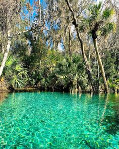Rainbow Springs is just north of Dunnellon and at one time it was a popular tourist attraction. It is now a state park. Florida Springs, Rainbow Springs Florida, Natural Springs In Florida, Blue Springs State Park, State Parks, Rock Springs Run, Florida Travel, Florida 2017, Orlando Strong