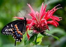 25 Kentucky Native Plants that Attract Bees and Butterflies