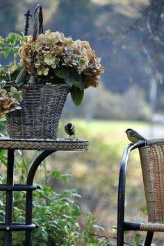 """""""Birds In My Garden..."""""""