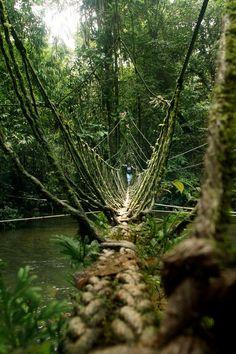 Headhunters Trail, Gunung Mulu National Park / Malaysia (by VM...