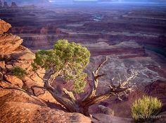 Living on the edge - Canyonlands National Park