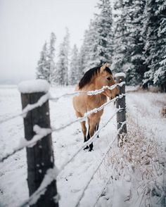 Shared by Gemma Styles. Find images and videos about winter, snow and animals on We Heart It - the app to get lost in what you love. All The Pretty Horses, Beautiful Horses, Animals Beautiful, Beautiful Places, Cute Baby Animals, Animals And Pets, Funny Animals, Horse Pictures, Horse Photography