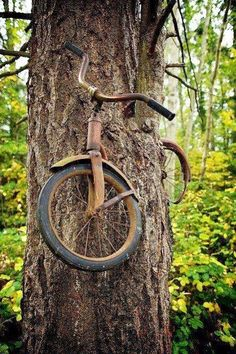 """The caption read """"A boy went to away to war in 1914 and left his bike chained to this tree. He never returned, leaving the tree no choice but to grow around the bike."""" whatever the truth is to this story the bike in the tree is pretty cool! Bike Chain, Foto Art, Abandoned Places, Belle Photo, Bonsai, Cool Pictures, Trippy Pictures, Beautiful Places, Beautiful Images Of Nature"""