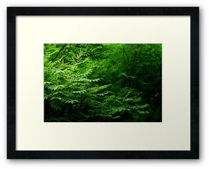 In The Forest Framed Print by Anastasia Shemetova #atmosphere #wood #forest #heart #landscape #green #deep #photo #photography #faerieshop #mystic #mystical #beautiful #plants #fern #jungle #tropical #bush #redbubble #wall #home #decoration #decor