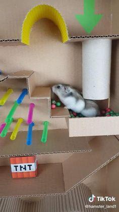 Diy Rodent Toys, Diy Hamster Food, Hamster Ideas, Hamster Toys, Hamster Bin Cage, Cool Hamster Cages, Hamster Life, Hamster Habitat, Funny Animal Names