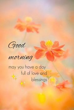 Good Morning Beautiful Pictures, Good Morning Beautiful Flowers, Good Morning Roses, Good Morning Images Flowers, Good Morning Beautiful Quotes, Good Morning Images Hd, Morning Pictures, Morning Wish, Gd Morning