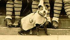 Starting in 1921, Stubby attended Georgetown University Law Center with Conroy, and became the the university's official mascot, a predecessor to the Hoya bulldog of the present day..  He would be given the football at halftime and would nudge the ball around the field to the amusement of the fans.