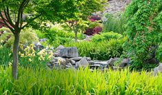 You can use stones as ornamental features to add solidity and texture to a garden. The addition of a sea of greenery and drifts of pastel yellow irises soften the look.