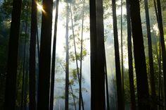 Bamboo forest of fushimi inari   von zenscablay