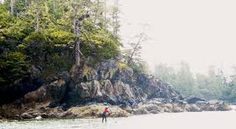 Image result for tofino forest