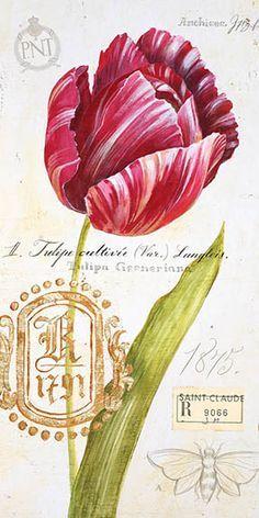 ,Flor