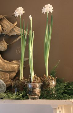 So easy, saw Paperwhite bulbs at Walmart for $4.97 for 4.  Might start to next week for Christmas day blooms. Can do.