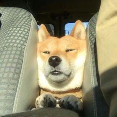 眠くなっちゃった